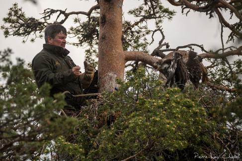 L'aiglon est enfin reposé sur le nid, Jarmo se prépare ainsi à la descente.