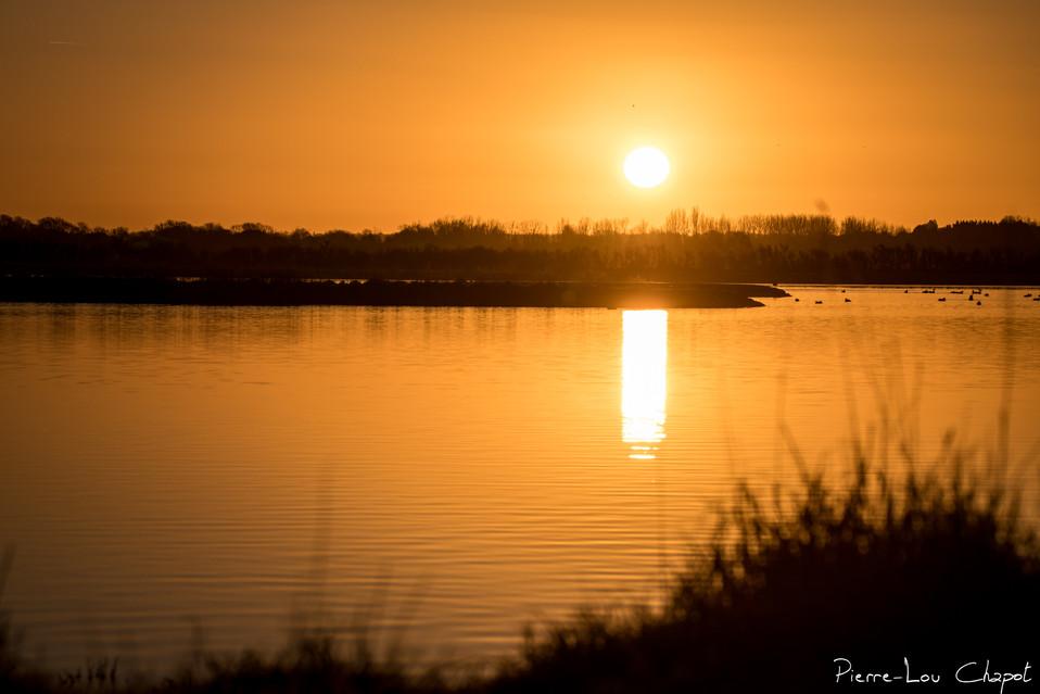 Lever de soleil sur la réserve de Chanteloup