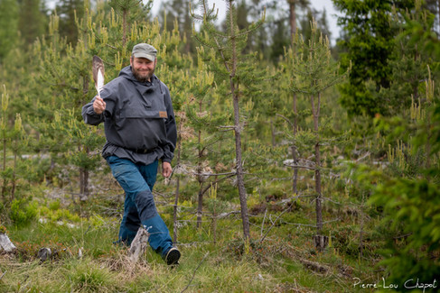 Avant de présenter le déroulement du baguage en lui-même, il est important de souligner le travail considérable réalisé par le Metsähallitus (Direction des forêts finlandaises), et notamment Petri Piisilä. Chaque année au printemps et au début de l'été, son rôle est de contrôler l'utilisation des nids d'aigle sur les différents territoires connus ainsi que de trouver les éventuels nouveau nids, et ce dans une grande partie de la Laponie. Il s'agit là d'un long travail qui nécessite une très bonne connaissance de ces espèces et de longues heures passées en extérieur, et ce quelle que soit la météo !  Ce jour-là, Petri nous accompagnait pour le baguage d'un jeune aigle royal.