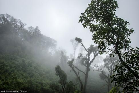 Parque Nacional Calilegua