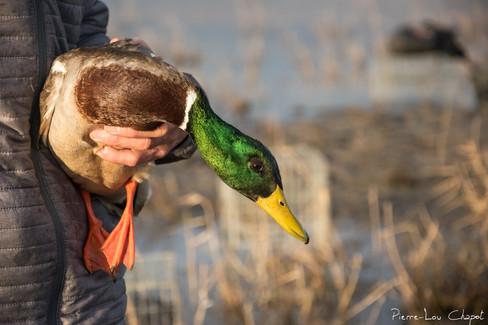 Duck goal