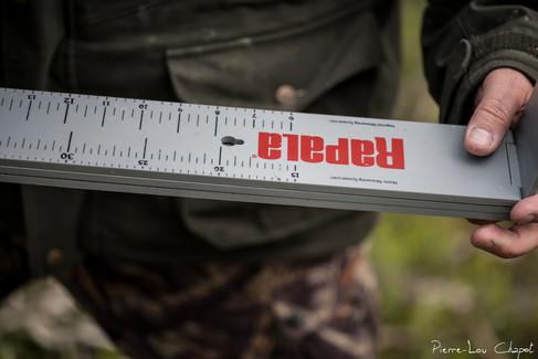 Ici les habituels petits réglets métalliques de bagueur ne suffisent plus ! Jarmo utilise une grande règle de pêcheur pour mesurer la longueur de l'aile de l'oiseau.