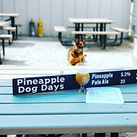 Pineapple Dog Days