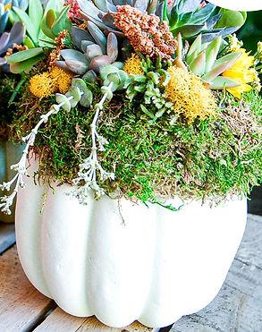 Fall Succulent Pumpkin Planter.jpg