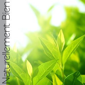Thé Vert Bio - NN0076