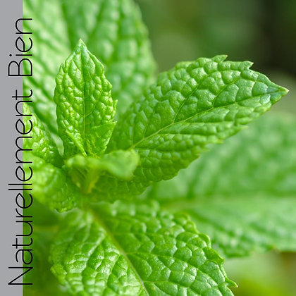 HE de Menthe Verte Bio - NA0055