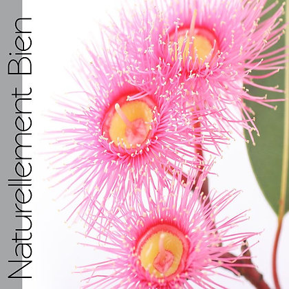 HE d'Eucalyptus Globuleux Bio - NA0006