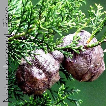 HE de Cyprès Vert Bio - NA0005
