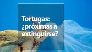 La tortuga de carey está a un paso de extinguirse