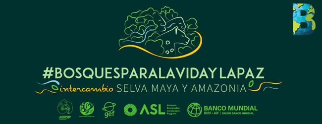 Selva Maya–Amazonía: por los bosques, la vida y la paz