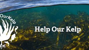 Help Our Kelp, la iniciativa que busca proteger los bosques de algas de Gran Bretaña