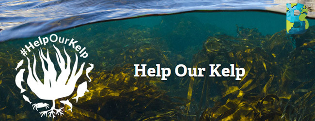 Help Our Kelp, Sir David