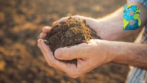 Bayer Carbon: el programa que premia a agricultores por adoptar prácticas que 'secuestren' carbono