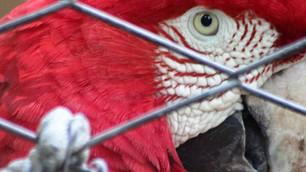 México se alía con la Interpol para combatir el tráfico ilegal de especies