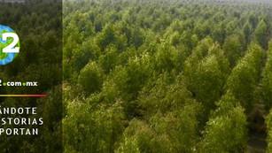Tsunami de los mil millones de árboles está transformando Pakistán