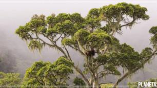 Costa Rica recupera sus bosques con programas de reforestación