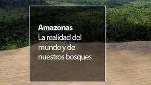 Brasil perdió 4,800 km2 de selva tan sólo en el 2016