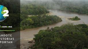 Estudio revela que el 80% de las especies de peces del Amazonas están contaminadas por partículas de