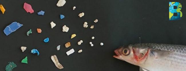 Estudio encuentra plástico en 1 de cada 5 peces en México