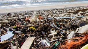 Degradación del medio ambiente y contaminación causan más muertes que las guerras