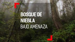 Bosque de Niebla bajo amenaza por la Semarnat
