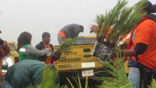 CDMX planta casi 2.6 millones de árboles en suelo de conservación: #RetoVerde