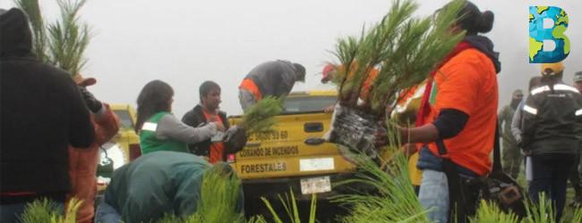 Reforestan Sedema CDMX con casi 2.6 millones de árboles