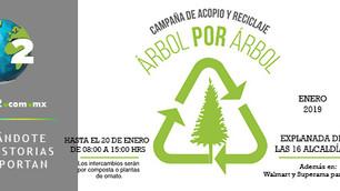 'Árbol por árbol': CDMX acopia y recicla árboles navideños