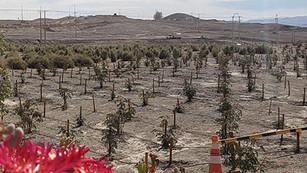 Reforestando el desierto de Atacama para contrarrestar el calentamiento global