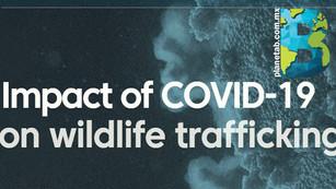 Pandemia disminuye pero no frena el tráfico de especies animales
