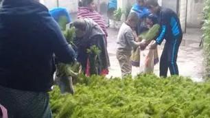 Jornada de Reforestación Naná Echéri: comunidades purépechas reforestan y plantan 600 mil árboles