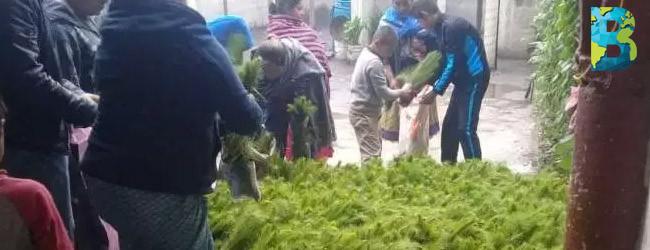 Comunidades purépechas reforestan y plantan 600 mil árboles