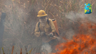 Video muestra la alarmante situación de los incendios en la selva amazónica brasileña