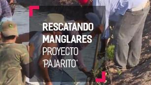 Proyecto 'Pajaritos': rescatando los manglares de Nayarit