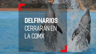 Se aprueba reforma para prohibir delfines en espectáculos públicos y privados