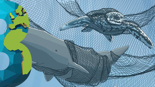 10% de los barcos pesqueros mexicanos incurren en la pesca ilegal