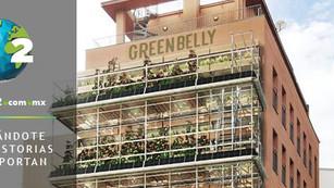 Greenbelly, el sistema de agricultura vertical que utiliza paredes subutilizadas