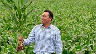 VITALA: el sistema de maíz híbrido de tecnología mexicana que revolucionará el cultivo del maíz