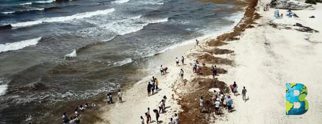 Quintana Roo busca industrializar sargazo