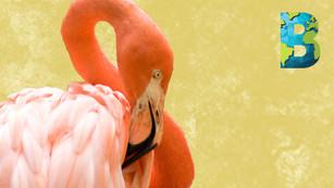 Durante confinamiento, zoológicos en Mérida lograron reproducir especies en peligro de extinción