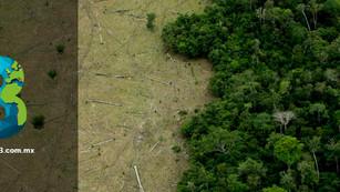 La selva amazónica es nuestra no suya: Brasil