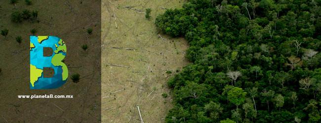 la selva amazónica es de Brasil no del mundo