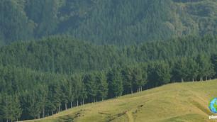Jacinda Ardern: la revolución verde de Nueva Zelanda