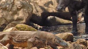 Indonesia cancela cierre de isla de Komodo en 2020, solo limitarán el turismo... cuestionable decisi