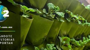 Singapur busca su seguridad alimentaria con granjas urbanas en techos de centros comerciales