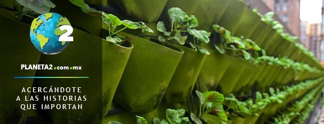 granjas urbanas singapur seguridad alimentaria