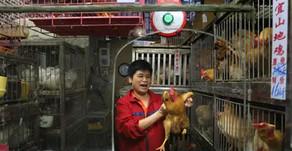 Igualdad Animal lanza campaña mundial para  prohibir los mercados de animales vivos