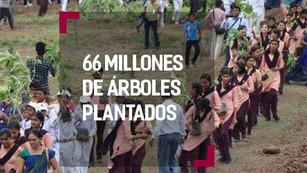 India plantó 66 millones de árboles en tan sólo 12 horas