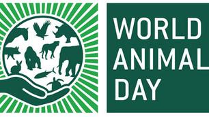 Día mundial del animal: celebremos respetando y fomentado la vida