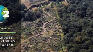 Ecocidio y corrupción: Gobierno del Estado de México aprobó tala de 200 mil árboles para desarrollo